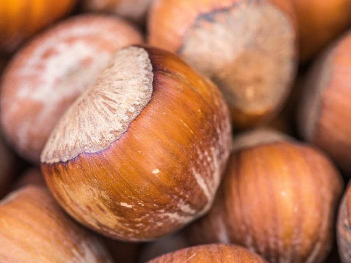 Jumbo Hazelnut Crop